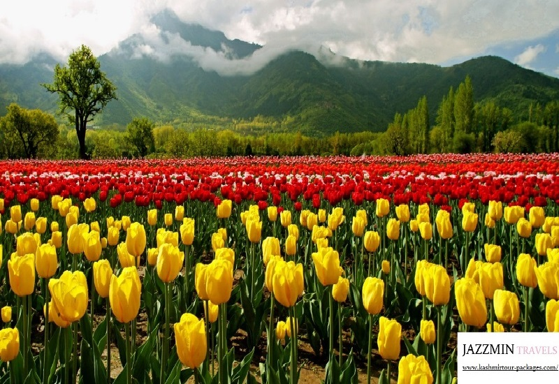 Kashmir Honeymoon Packages