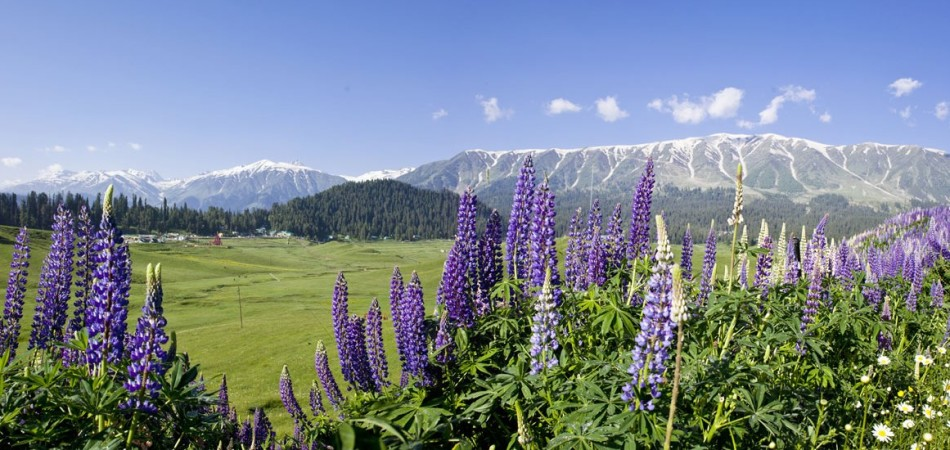 Kashmir Tour Packages from Kolkata, Delhi, Mumbai, Jaipur, Pune, Bangalore and all over India from Jazzmin Travels