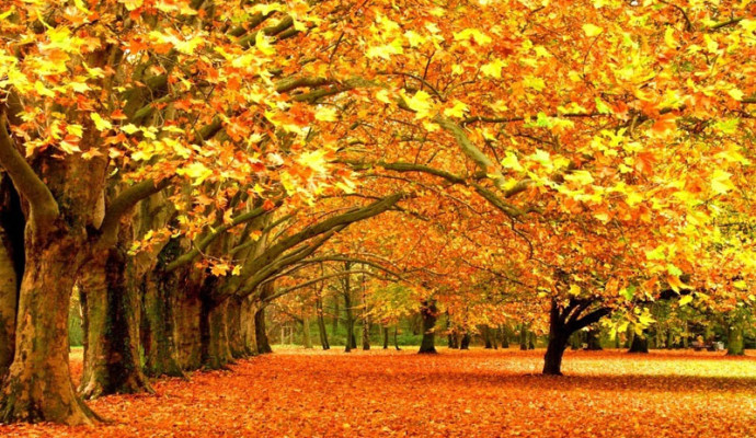 Kashmir in Autumn